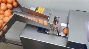 دستگاه جدا کننده زرده از سفیده تخم مرغ
